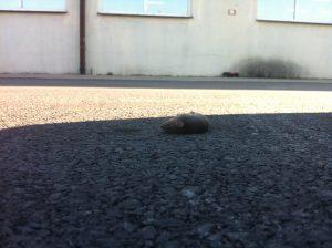 Mysz po spożyciu trucizny