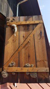 Gniazda os niespodzianka na drzwiach od stodoły