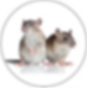 Zwalczanie mysz