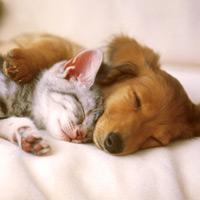 Pies i kot - alergeny